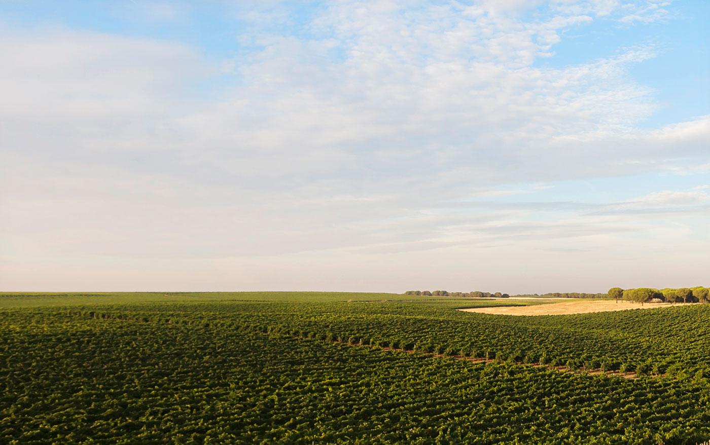 Dominio de Bornos - D.O. Ribera del Duero - El Viñedo